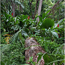 Garden of the Sleeping Giant, Viti Levu, Fiji